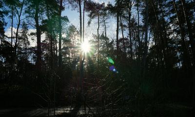 Wald mit blauen Himmel und Sonnenblendung