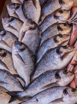 Auf dem Fisch-Bazar 03