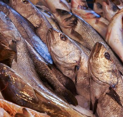 Auf dem Fisch-Bazar 11