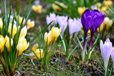 bald ist Frühling...