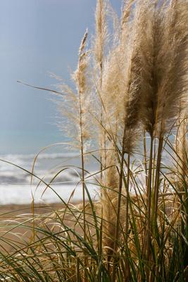 Strandhafer und Wellengang