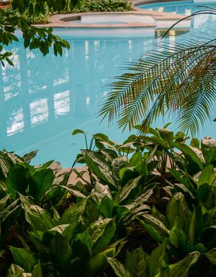 Indoor-Pool und Palmen 2