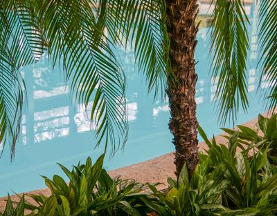 Indoor-Pool und Palmen 3