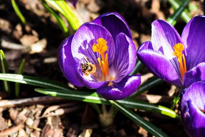 Frühlingseinladung