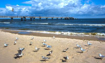 Möven am Strand