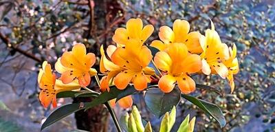 Blütenkonzert