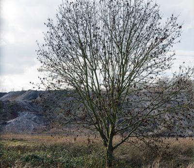 Baum vor Hang