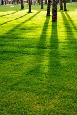 Wenn die Abendsonne lange Schatten wirft (hoch)