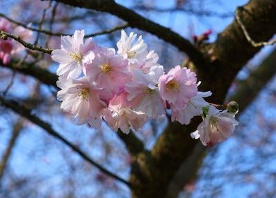 Die Farbpalette des Frühlings