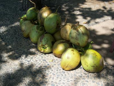frische Kokusnüsse liegen zum Verkauf bereit..auf Bali