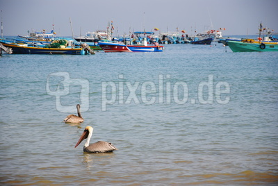 Pelikane und Boote Puerto López