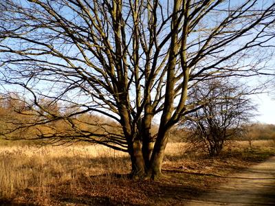Der vielebäume Baum