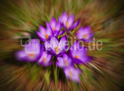 Frühling einmal anders 01