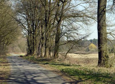 Vorfrühling in Wald und Flur