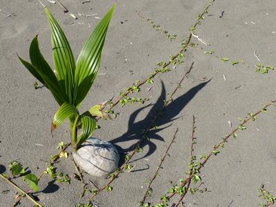 Wachstum im Sand