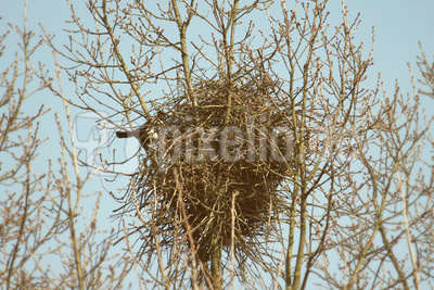 Frühling für Vogel