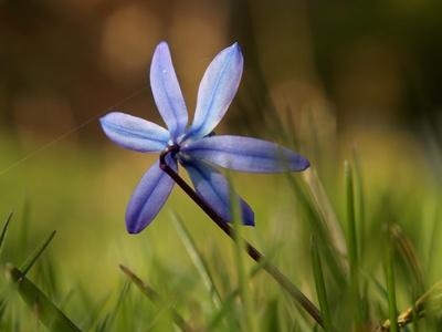Ein blauer Stern