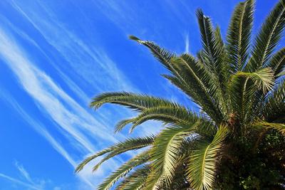Palmenwetter