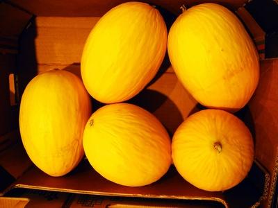 sonnige Melonen