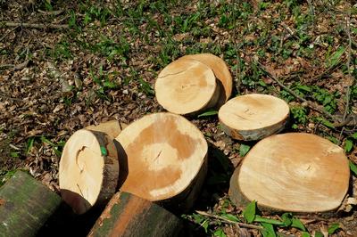 Holz-Rondellen