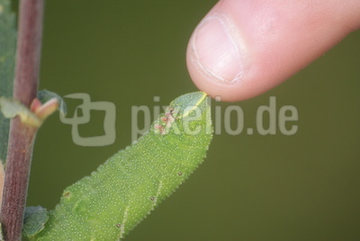 grünender Finger