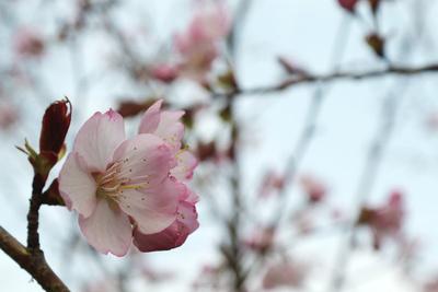 Frühling Knospe