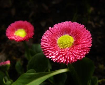 """""""Blumen im Garten"""""""