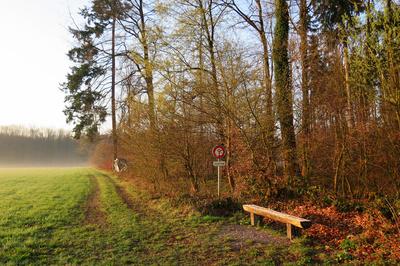 Morgenfrische am Waldrand