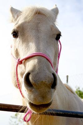 Isabell Stute mit rosa Knotenhalfter