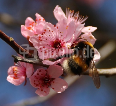 Pollenspass im März
