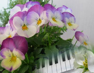 Frühlings-Musik