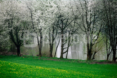 Licher Frühling