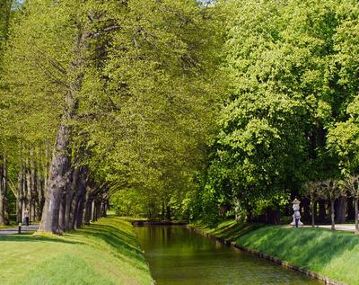Frisches Grün im Park