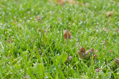 Rasen voller Tautropfen