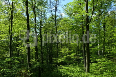 Der Wald im frischen Frühlingsgrün