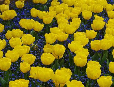 Gelb mit blau