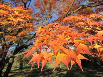 Herbstblätterstimmung