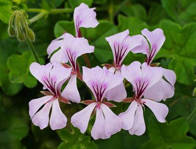 Exotische Blüten in Reihe