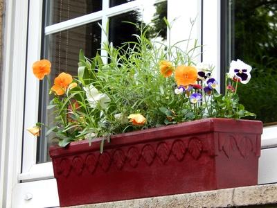 Kostenloses Foto Blumen Fensterbank Pixelio De