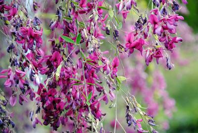 vergänglicher Blütentraum