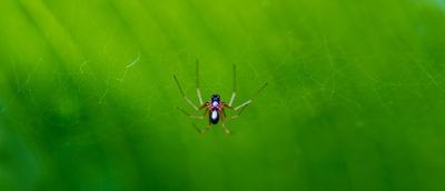 Kleine Spinne ganz groß