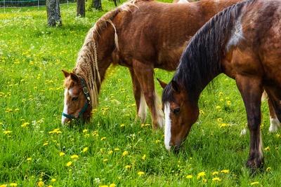 Pferdeweide im Frühling