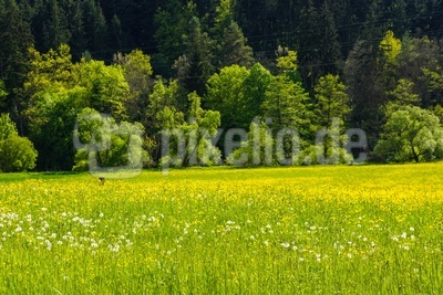 Neckartal im Frühlingsgrün 01