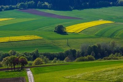 Wiesen und Felder im Frühlingsgrün 02