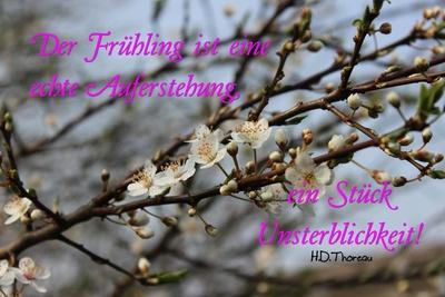 Frühlingszauber-Zitat