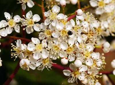 Blütenfülle . . . .