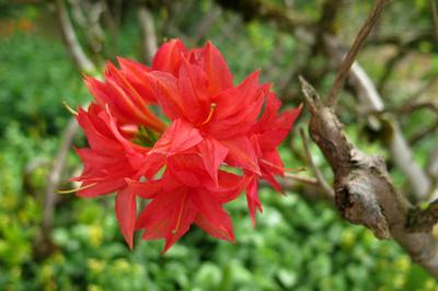 Im Reich der Rhododendren / 8