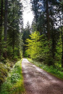 Waldwanderweg im Mai_1