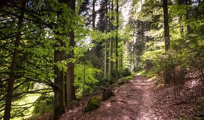 Waldwanderweg im Mai_4