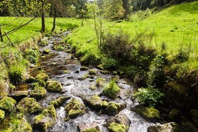 Am Sankenbach bei Baiersbronn 3
